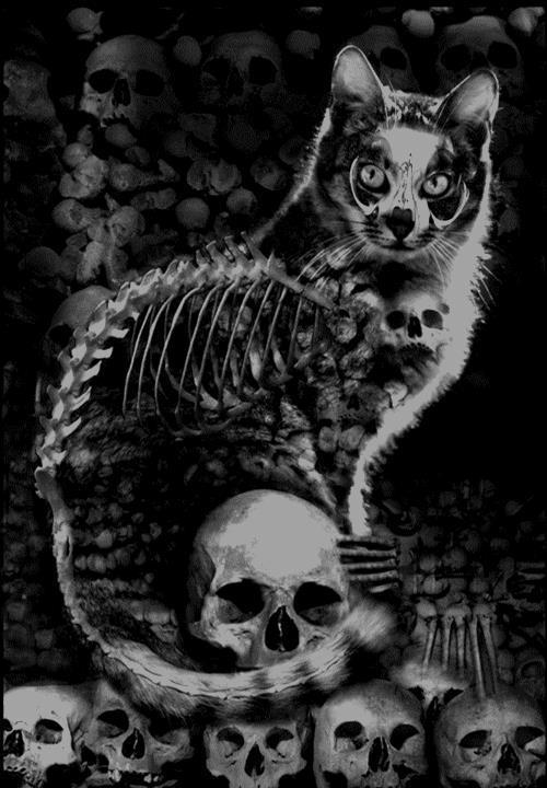 cat skeleton and skulls