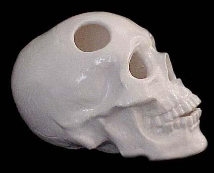 white skull ceramic