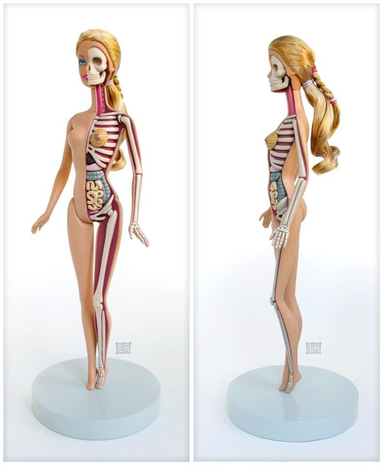 Barbie Anatomy Model