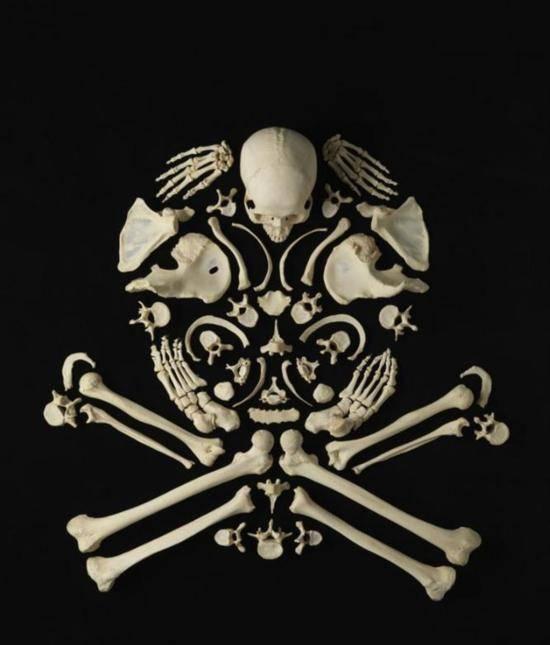 Skull Bone sculpture Francois Robert