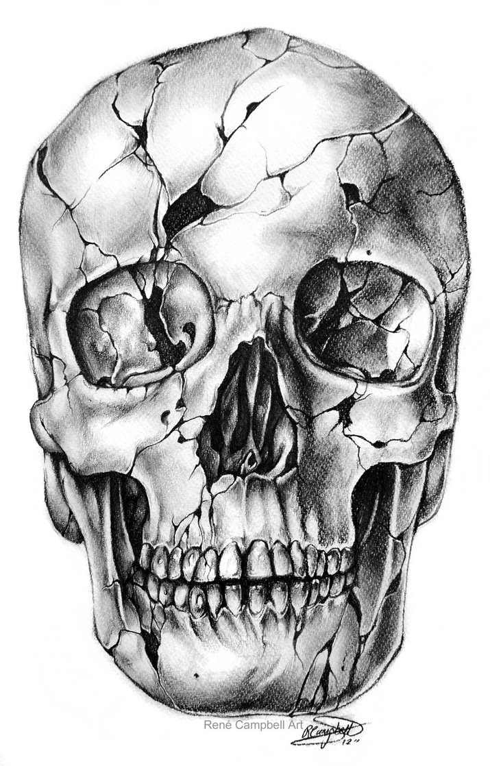 Skeleton Face Line Drawing : Skull drawings by rené campbell
