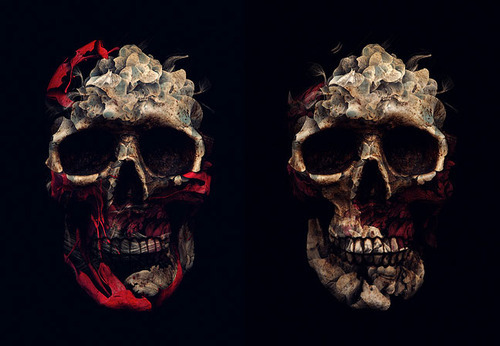Skull illustration by Alberto Seveso