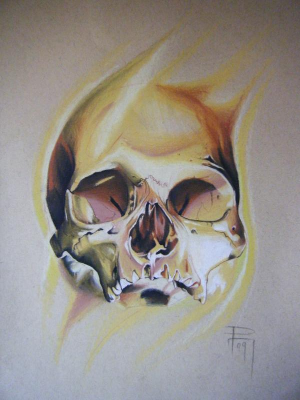 Skull drawing by Paul Marino
