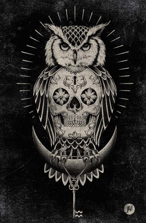 Owl and Skull illustration