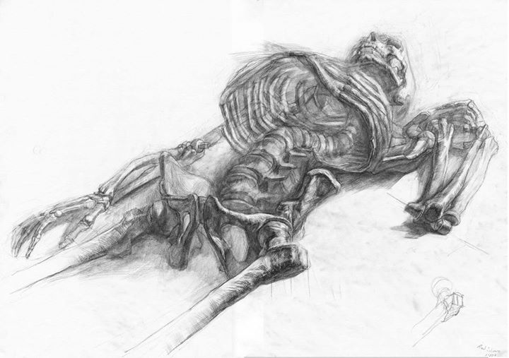 Skeleton drawings1