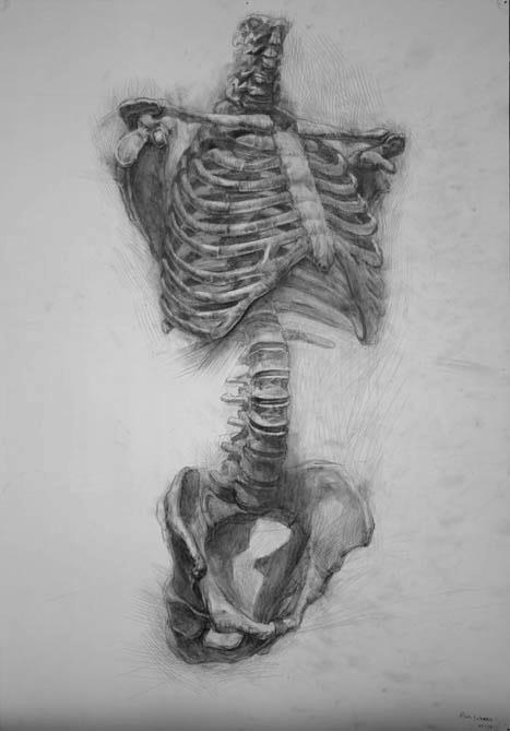 Skeleton drawings by Paul Schwarz 1