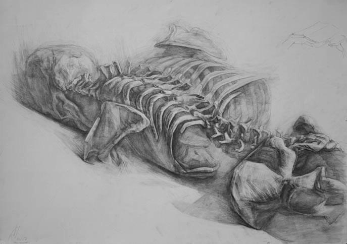 Skeleton drawings by Paul Schwarz 2
