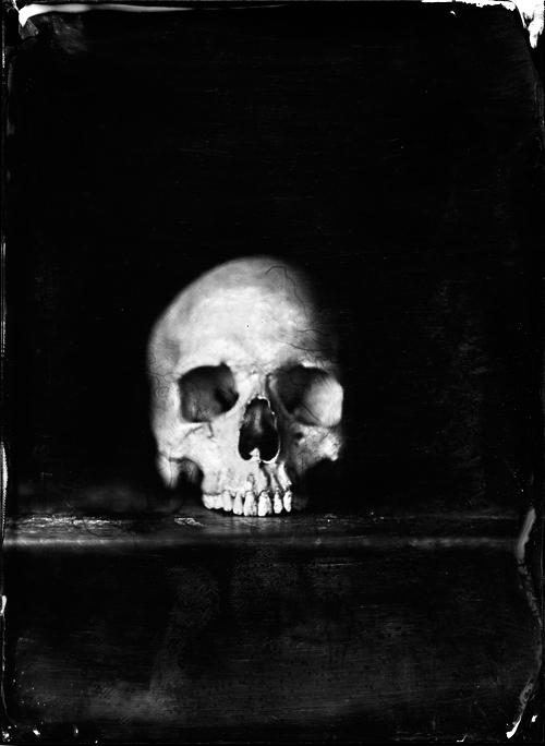 Skull photography by Jean-baptiste Senegas