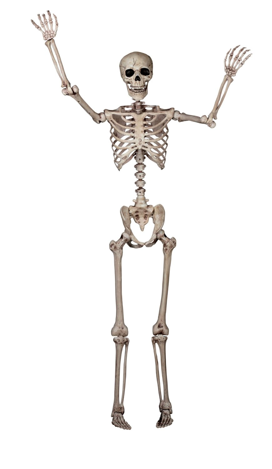 seasons pose n stay skeleton