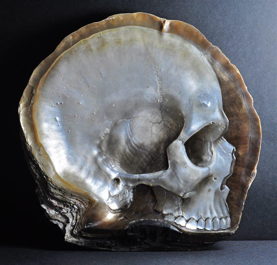 Skull Shell (4)