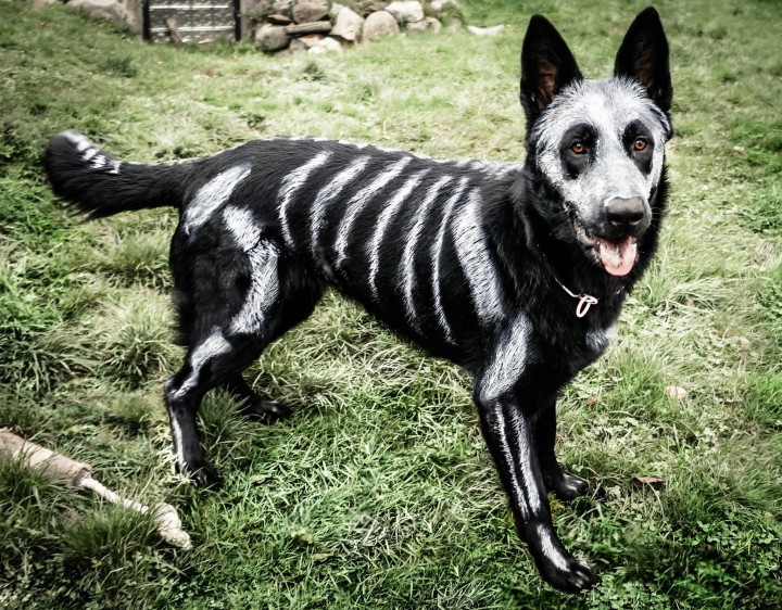 Animals Transformed Into Creepy Skeletons For Halloween