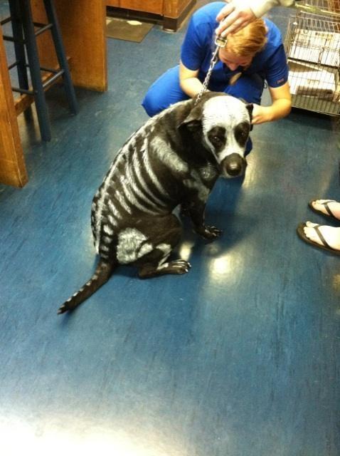skeleton dog painting