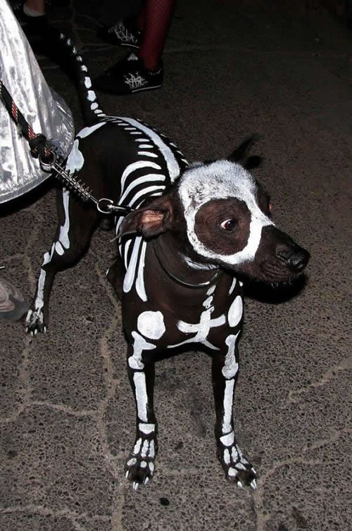 skeleton-dog