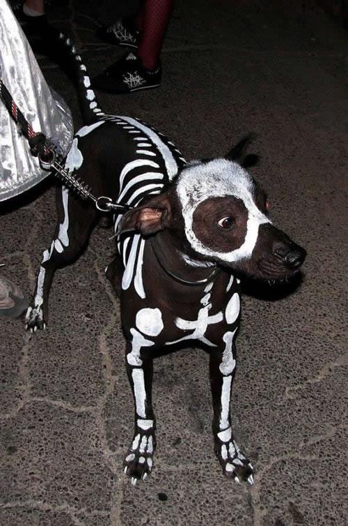 skeleton-dog