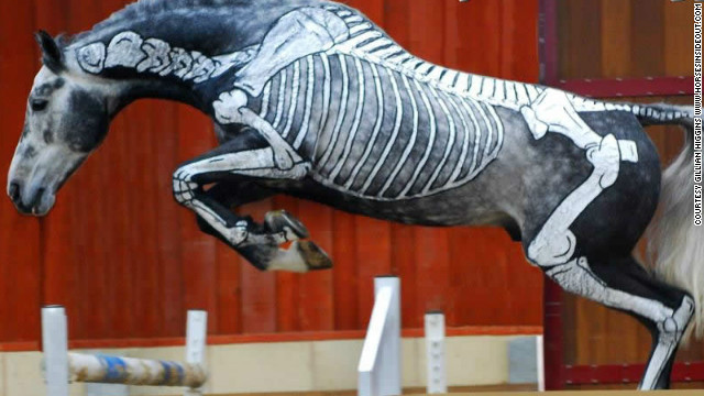skeleton jumping horse
