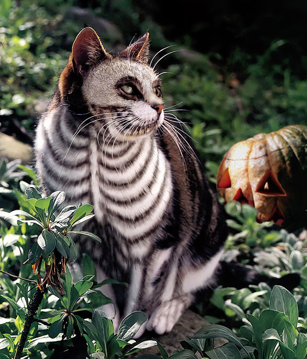 skeleton painted cat