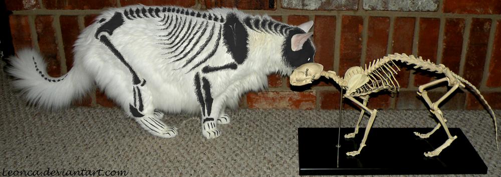 skeleton painted cat