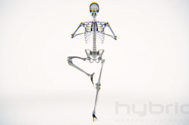 X-ray Body in Motion - Yoga