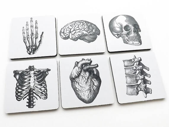 anatomy coasters (2)