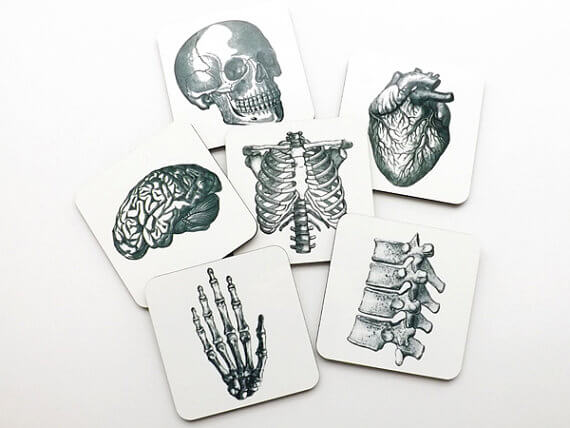 anatomy coasters