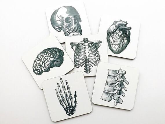 anatomy coasters
