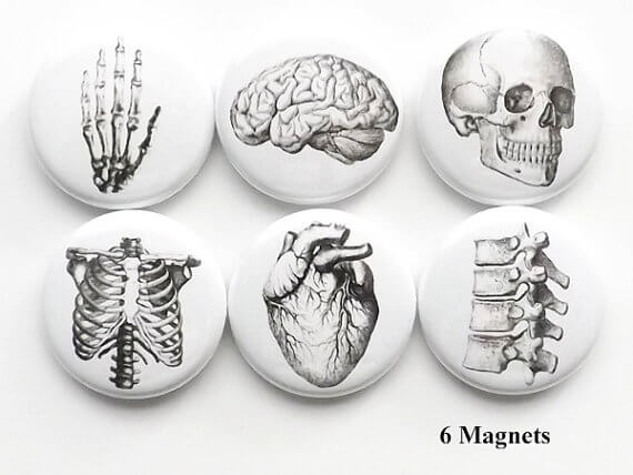 anatomy magnets (2)
