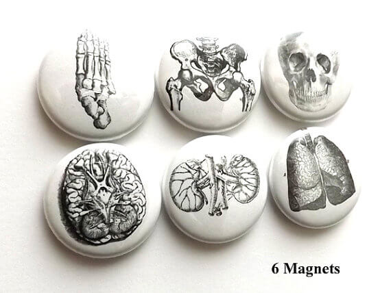 anatomy magnets