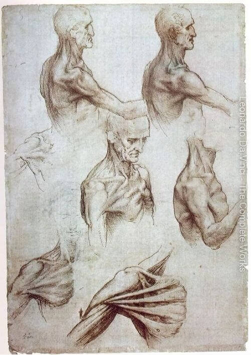 Muscles of the neck and shoulders