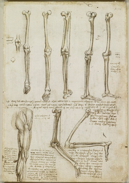 leonardo anatomist